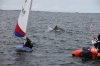 toppers_dolphin_03