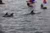 toppers_dolphin_04