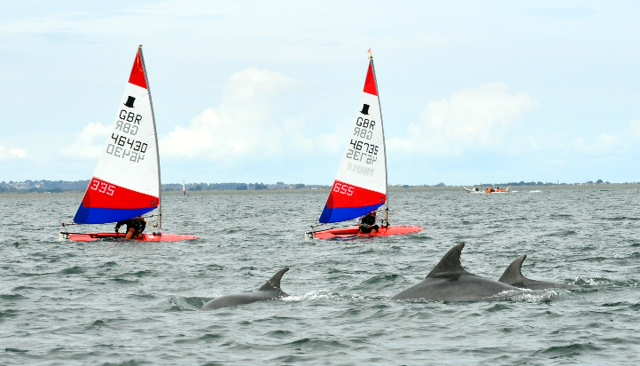 topper-world-dolphins-cropped