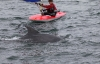 toppers_dolphin_02