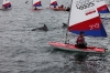 toppers_dolphin_05